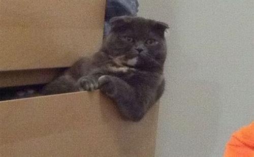 何か助言してくれそうなボス猫。