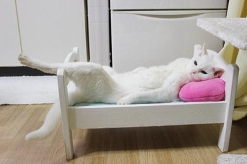 ボス猫の休日。