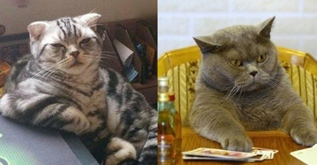 ボス猫の画像