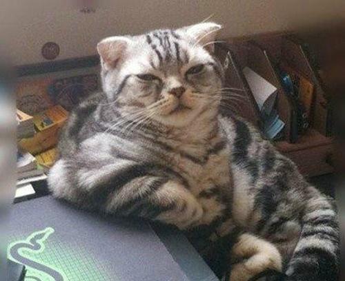 ボス猫の中のボス猫。
