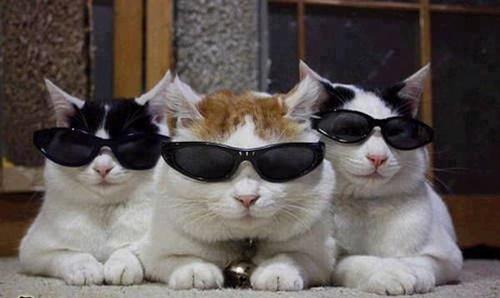 ボス猫連合。
