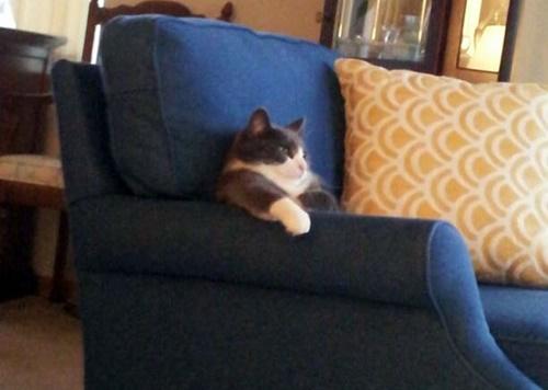 リラックスしてるボス猫。