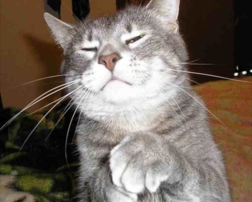 ちなみに子分猫はこんな感じ。