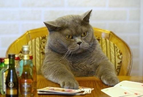 博打を打つボス猫。