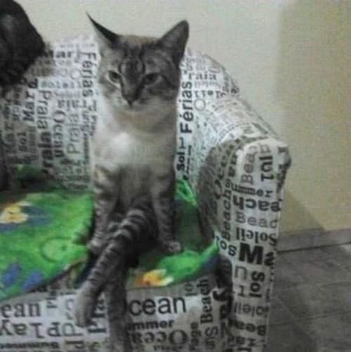インテリボス猫。