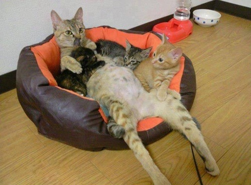 子猫をはべらすボス猫。