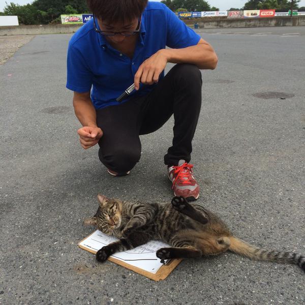 猫はお仕事を妨害するのがお仕事です。