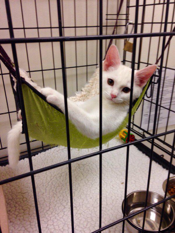 リゾート気分な子猫。