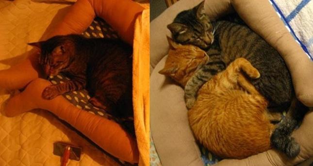 リアルすぎる足型猫ベッド。
