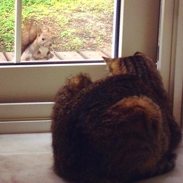 猫に会いに来たリス。
