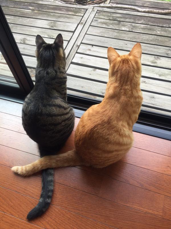 しっぽクロスがなんとも可愛い猫達。