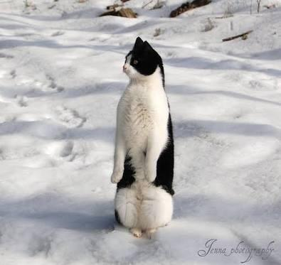 ペンギンですか?猫ですか?