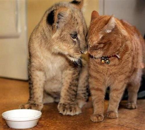 子ライオンと猫。