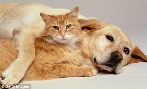 犬は猫の最も身近な友達。