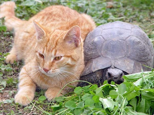 亀に寄り添う猫。