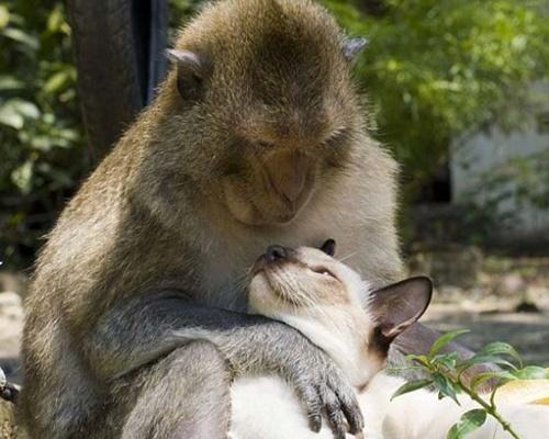 お猿さんとラブラブな猫。