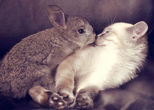 ウサギと仲良しな猫。