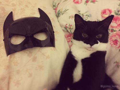 仮面とほぼおなじ猫。