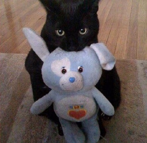 ぬいぐるみをくれる優しい猫。