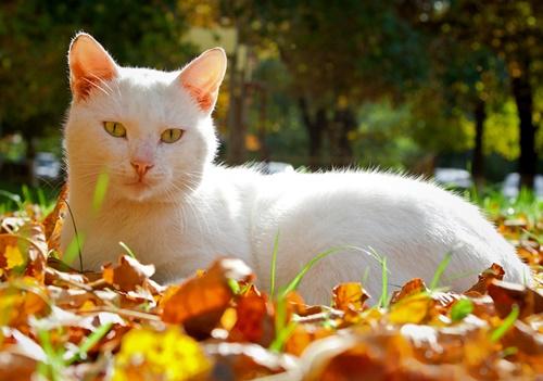 autumn005cat