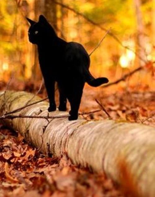 autumn006cat