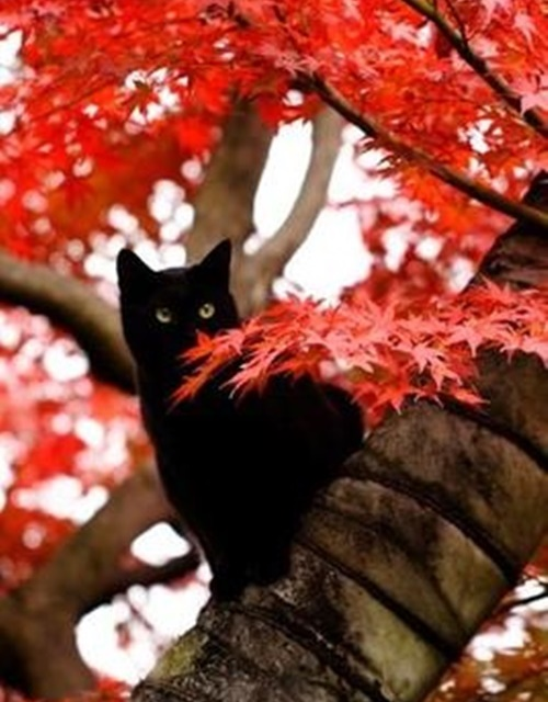 autumn007cat