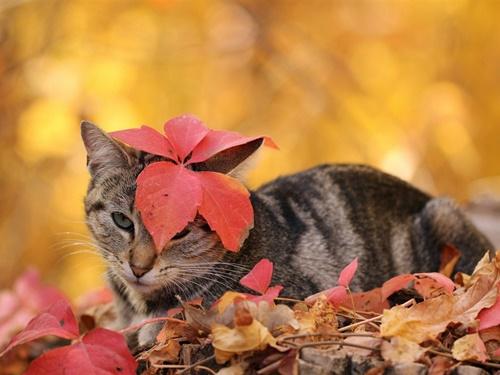 autumn008cat