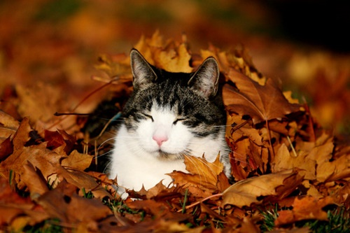 autumn009cat