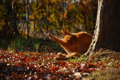 autumn010cat