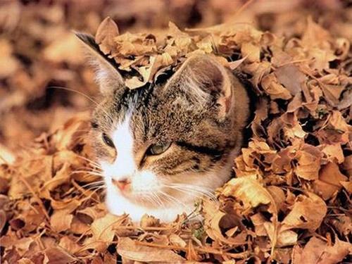 autumn012cat