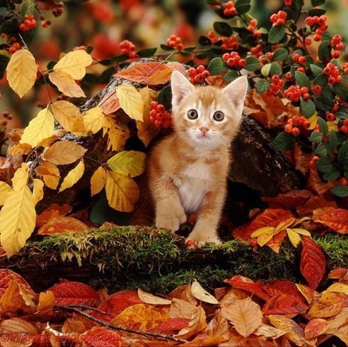 autumn014cat