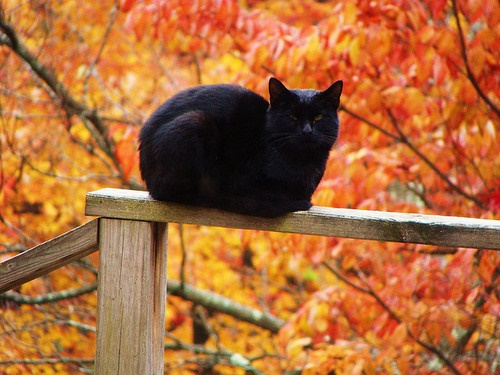 autumn016cat