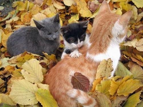 autumn017cat