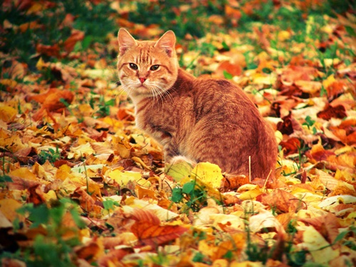 autumn018cat