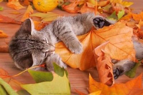 autumn019cat