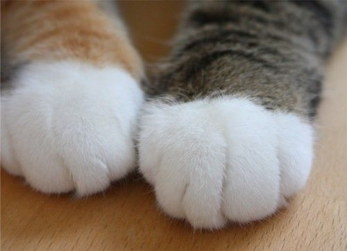 猫の手モフモフ。