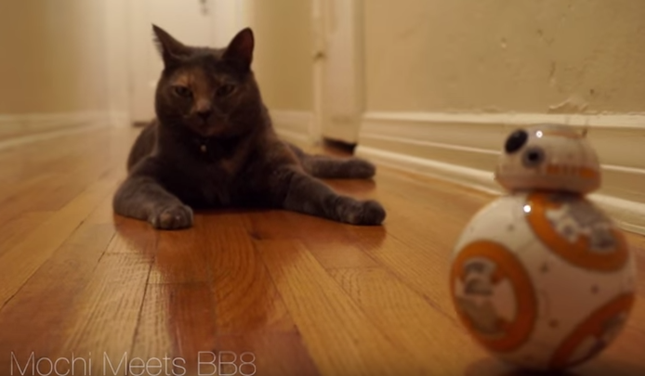 猫とおもちゃドロイドBB8