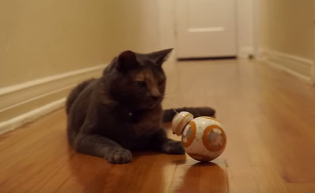 猫に近づくBB8