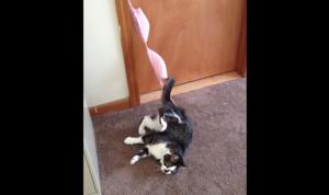 ブラジャーに捕まった猫。