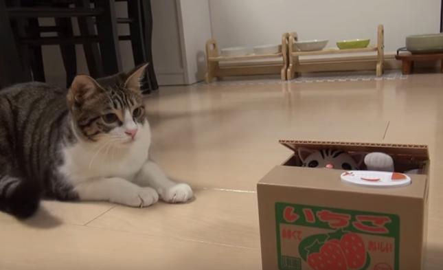 猫貯金箱VS猫