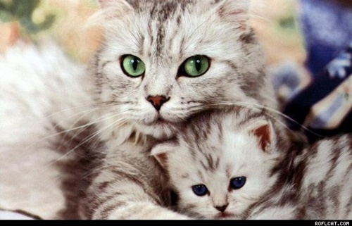 美しい母猫と子猫。