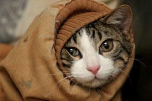 オシャレ猫になる場合もある。