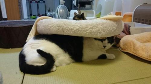 ベッドは被るものじゃない。