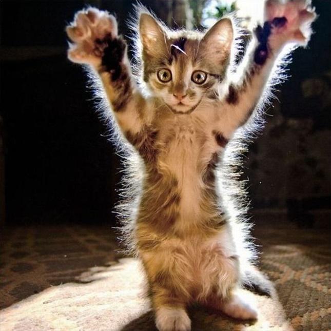 子猫の仁王立ち。
