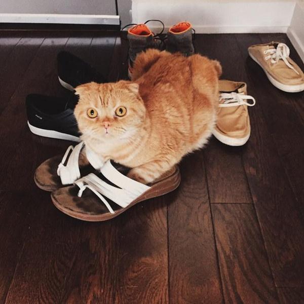 サンダル履きの猫。