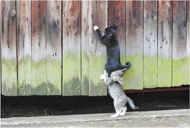 協力プレイする子猫たち。
