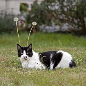 奇跡的に撮影された宇宙猫。