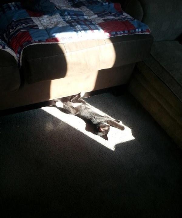 ベスト日向ぼっこポジションな猫。