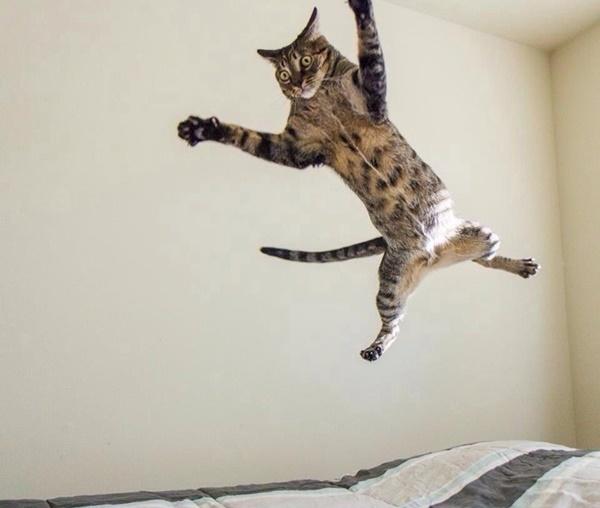 フライング猫。