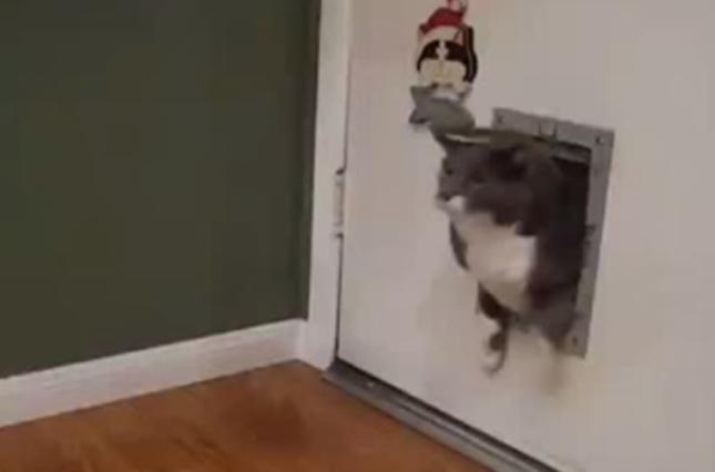 猫用ドアから猫。